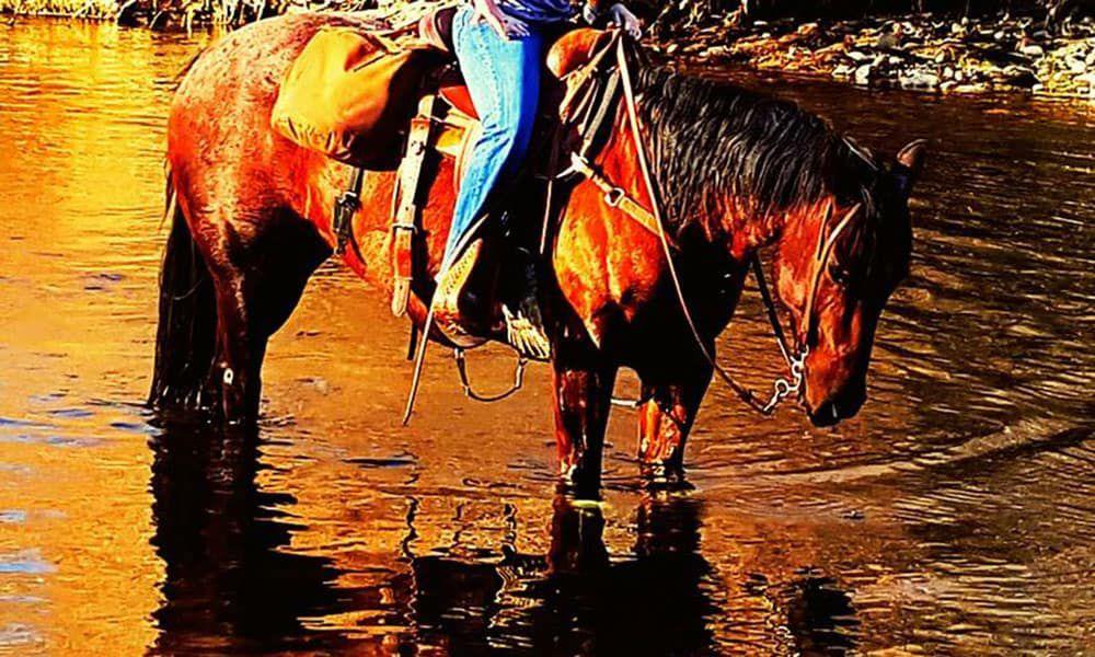 Underdog Cowgirls Cowgirl Magazine
