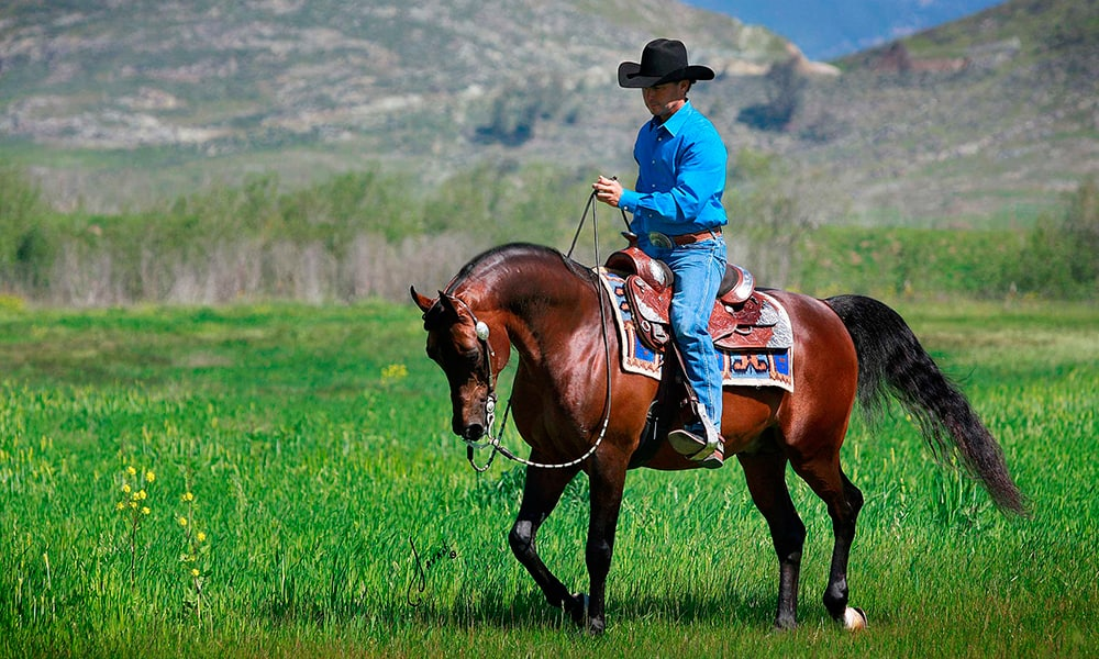 Arabians Cowgirl Magazine