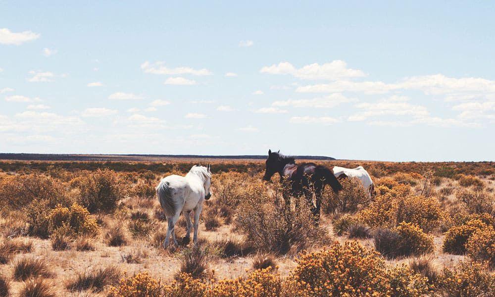 Cowgirl - Instagram