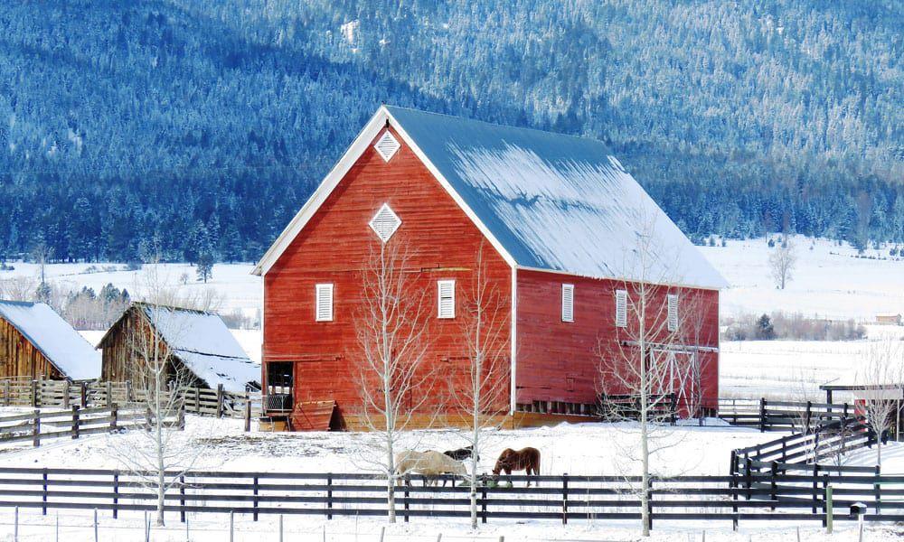 Cowgirl - Barns