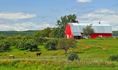Cowgirl - Barn
