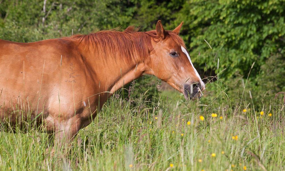 Cowgirl - Tick