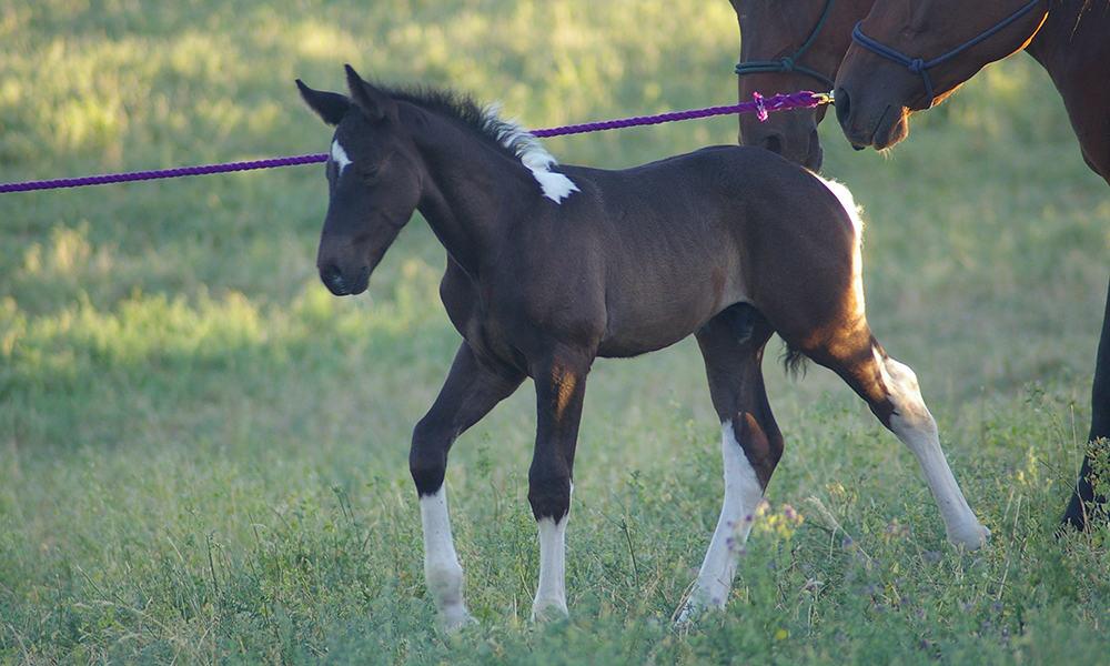 Foals Cowgirl Magazine