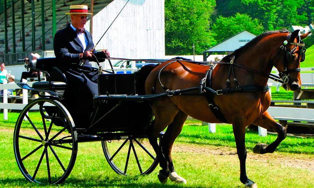 The Morgan Horse Cowgirl Magazine