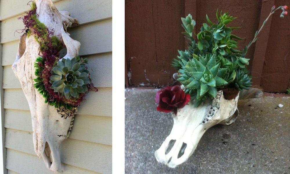 steer skulls with succulents