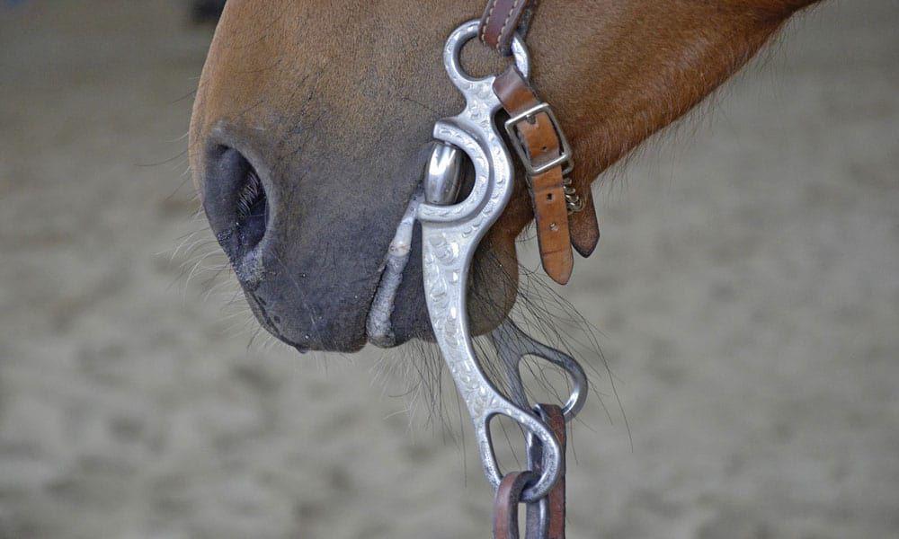 Cowgirl - Bit