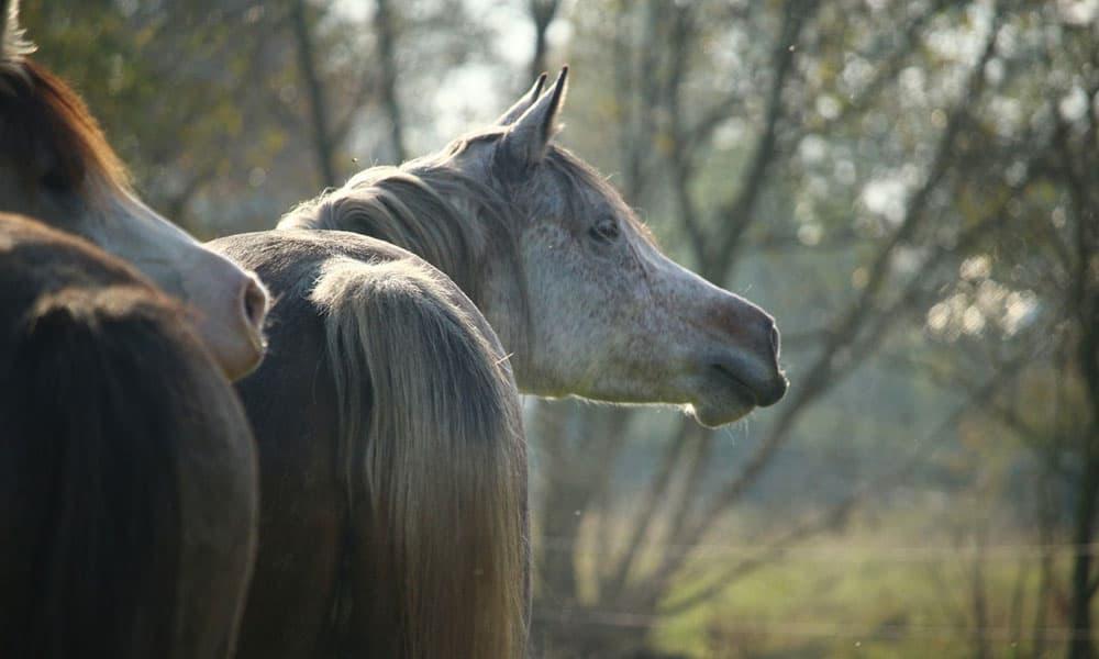 Cowgirl- Communicates
