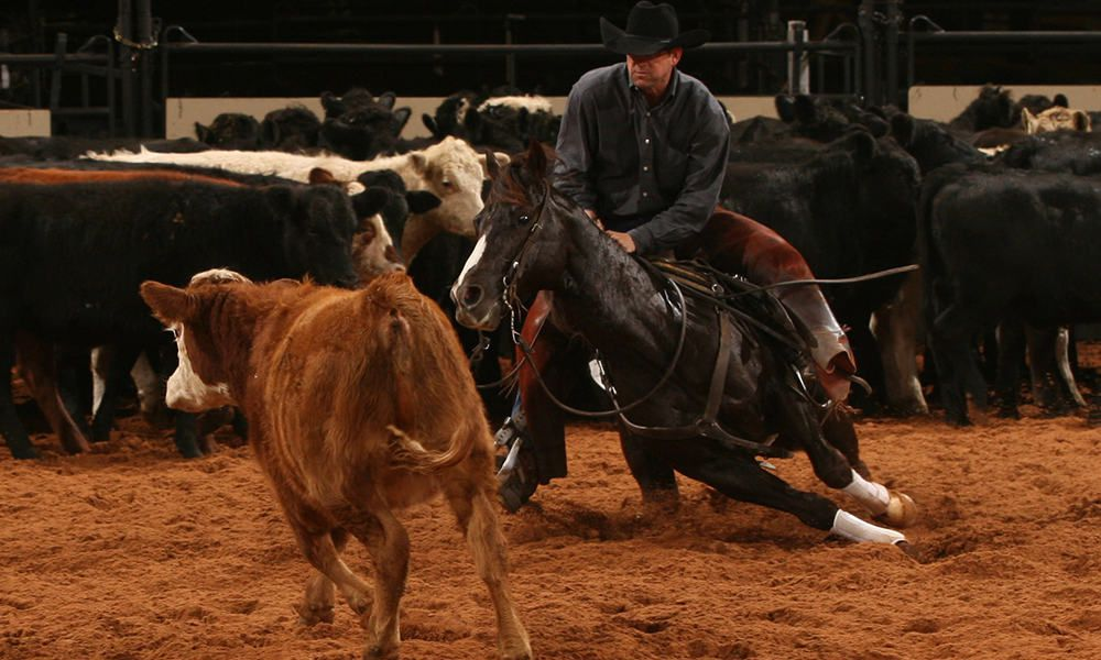 American Quarter Horse Horses Cowgirl Magazine