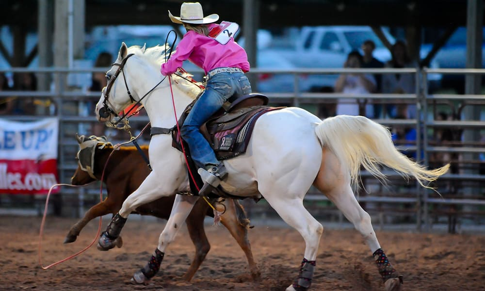 5 Fast Facts About The American Quarter Horse Cowgirl Magazine