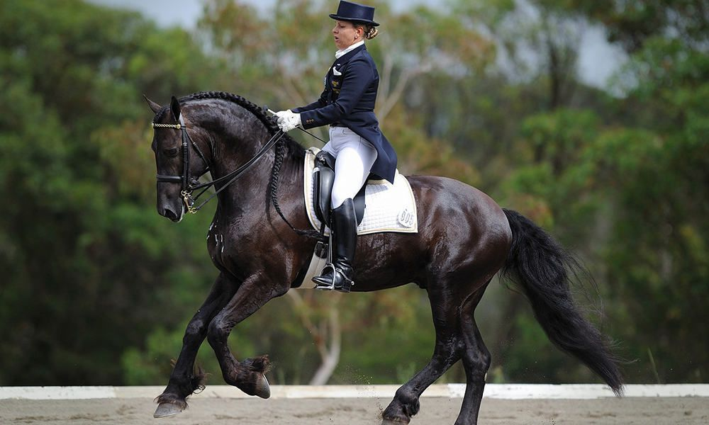 Facts Friesians Cowgirl Magazine