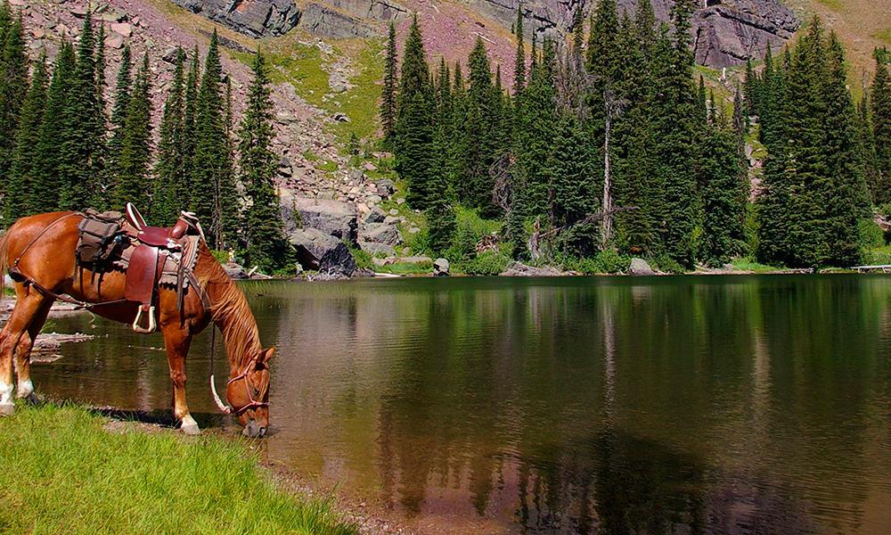 Trail Ride River Horses Cowgirl Magazine