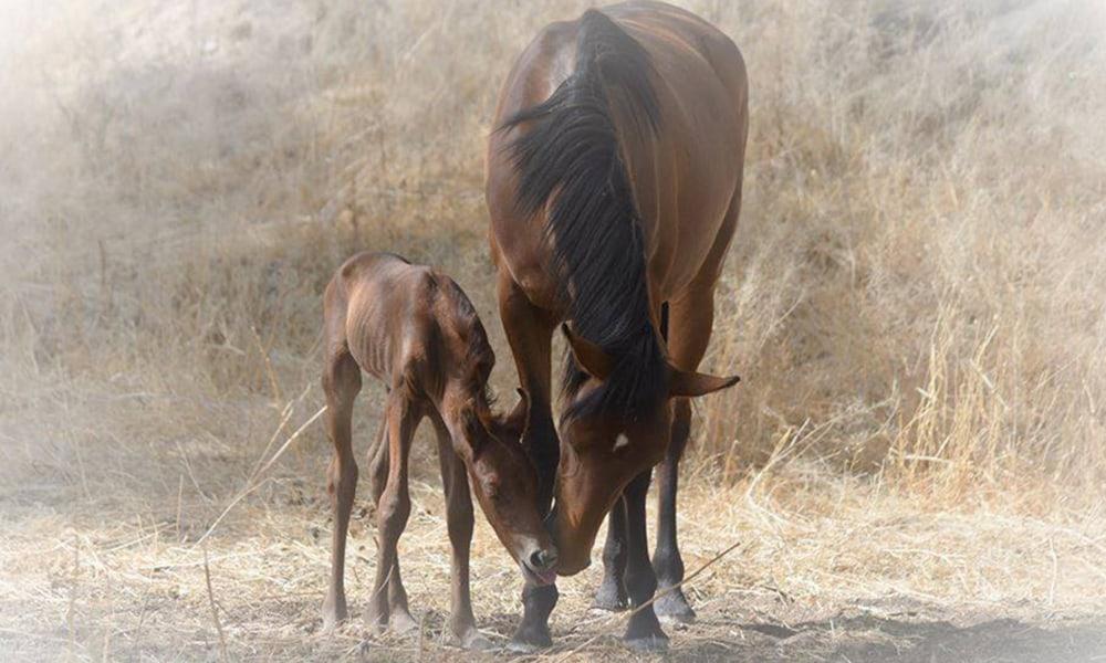 Mustangs Wild Horses Cowgirl Magazine