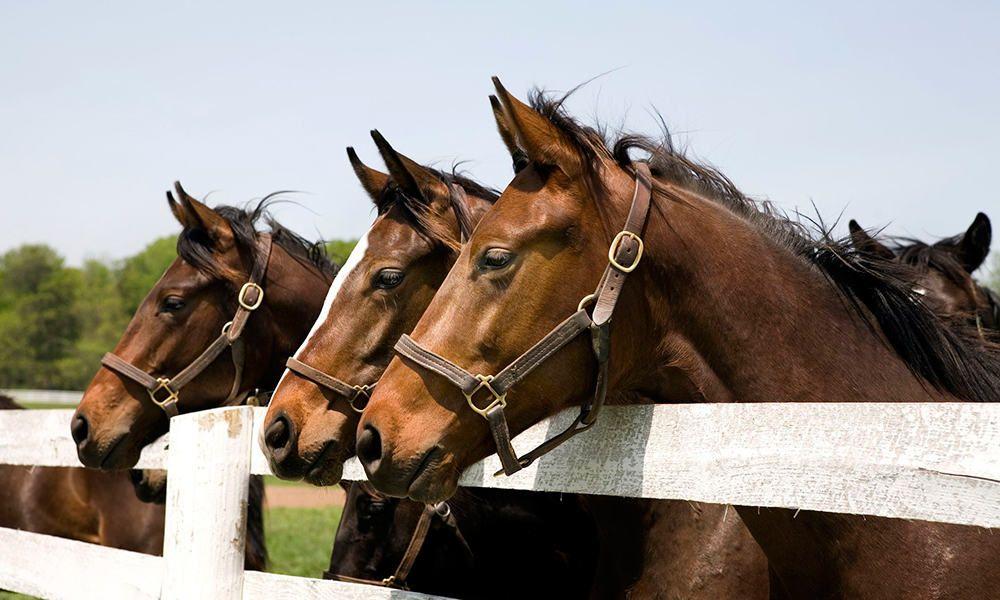 Thoroughbred Horse Thoroughbreds Cowgirl Magazine