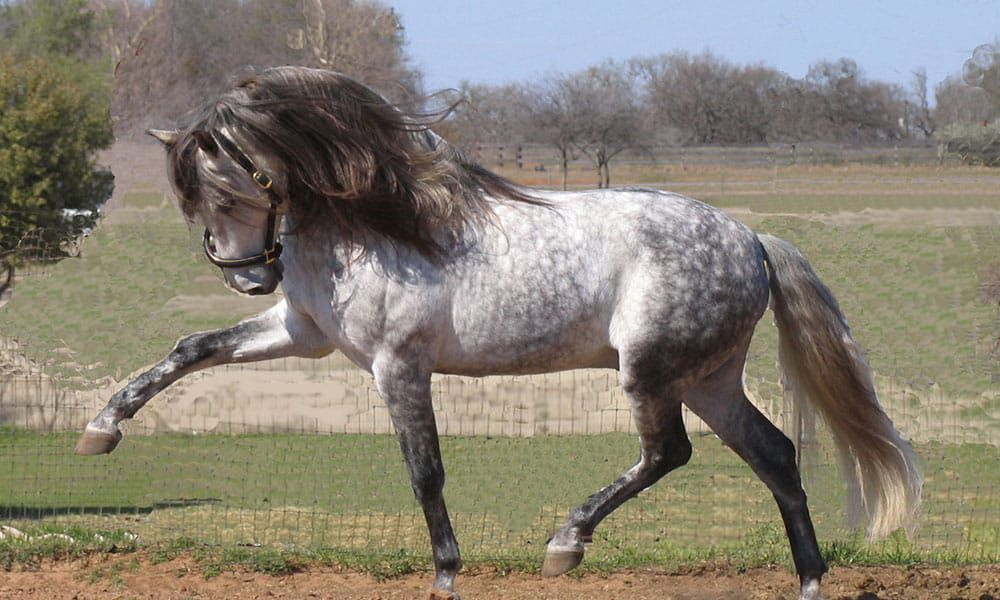 Andalusian horse cowgirl magazine