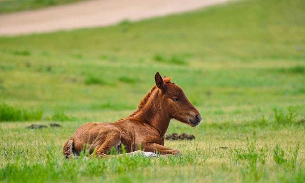 Cowgirl - Foals