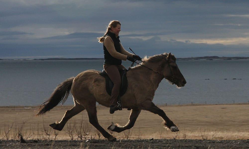 Icelandic horse horses Cowgirl Magazine