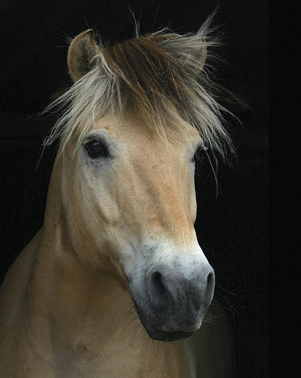 Fjord horse cowgirl magazine