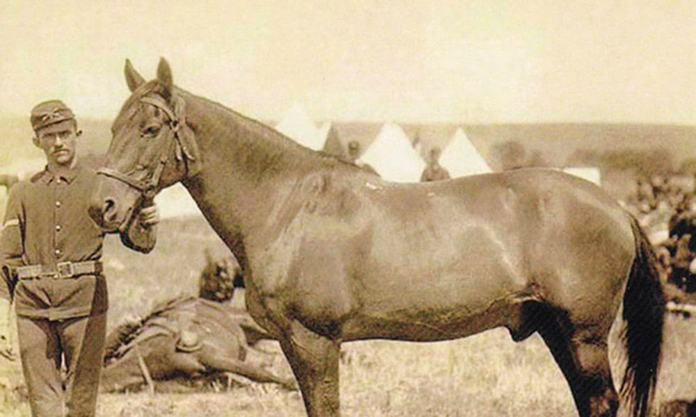 Comanche war horse battle of little bighorn cowgirl magazine
