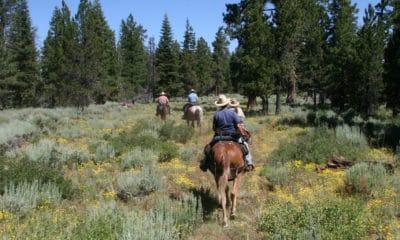 Cowgirl - Trip