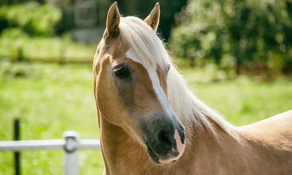 Cowgirl - Mare