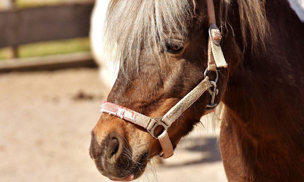 Cowgirl - Spa