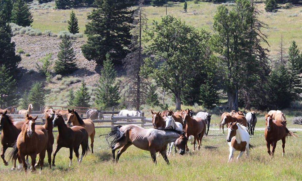Cowgirl - Ranch