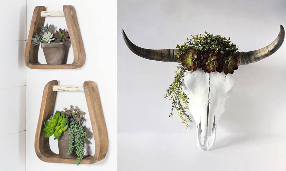 western succulents cowgirl magazine