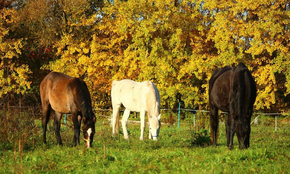 Cowgirl - Fall