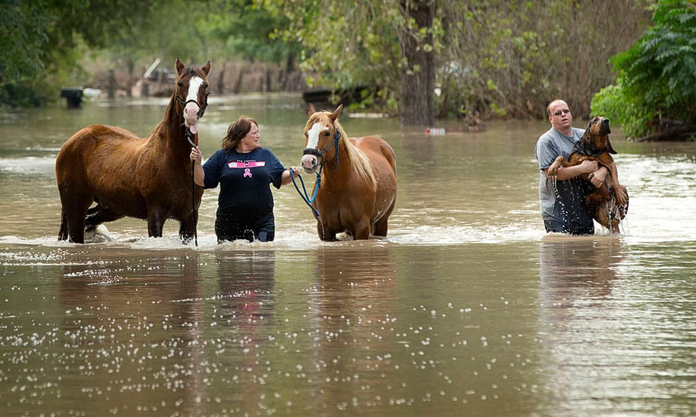 Natural Disasters Horse Evacuation Cowgirl Magazine