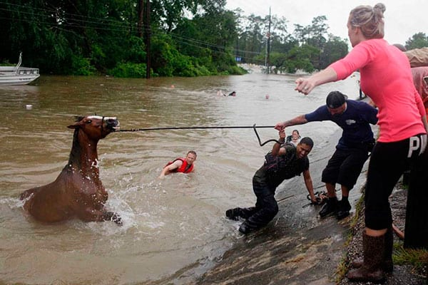 Hurricane Harvey Flooding Horse Rescues Cowgirl Magazine