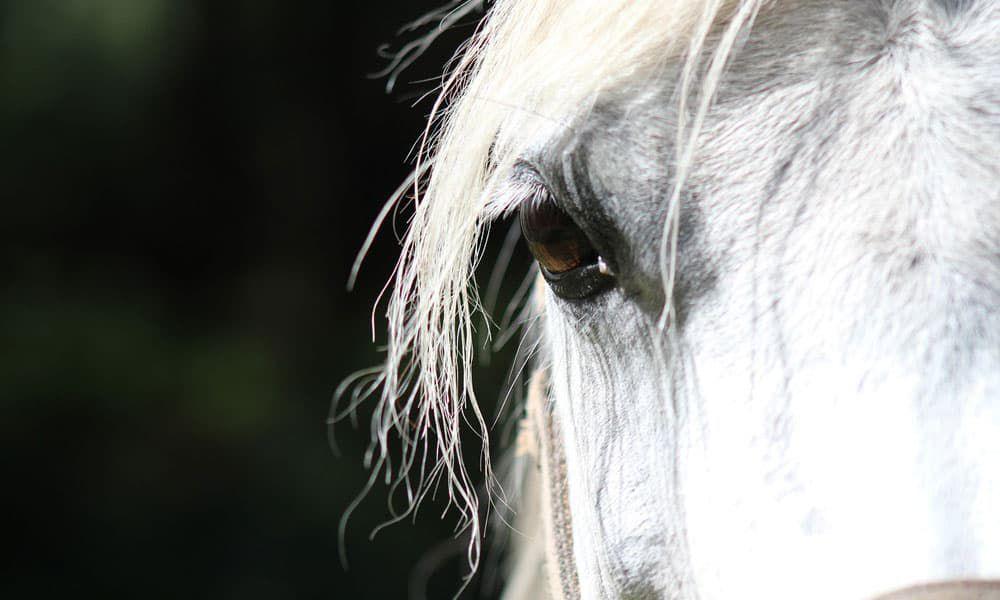 Cowgirl - Eye