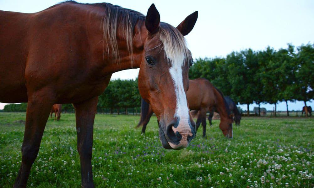 Cowgirl - Diseases