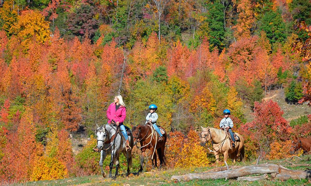 Horses Fall Cold Weather Cowgirl Magazine