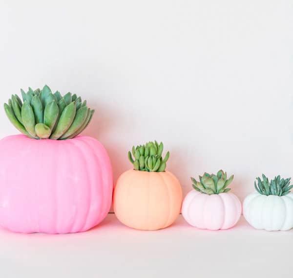 colorful-succulent-pumpkins