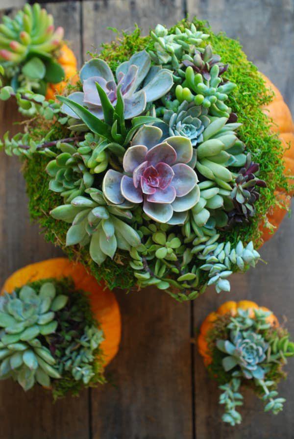 pumpkin-succulents