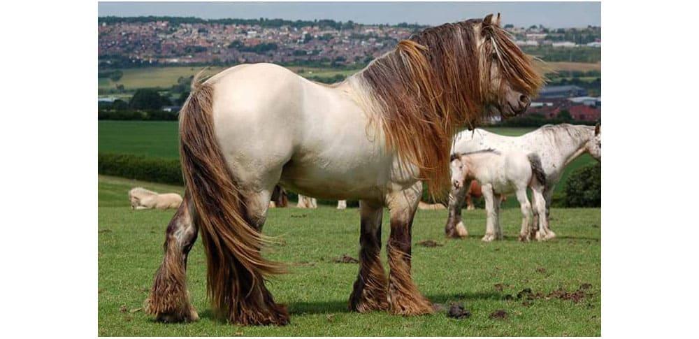 Cowgirl - Hair
