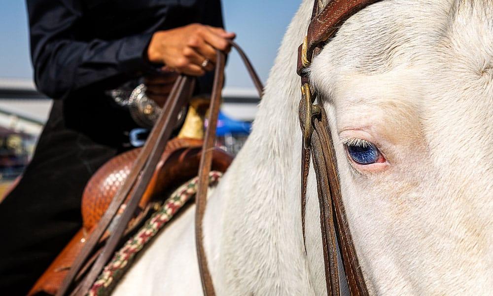 Cowgirl - Stirrup