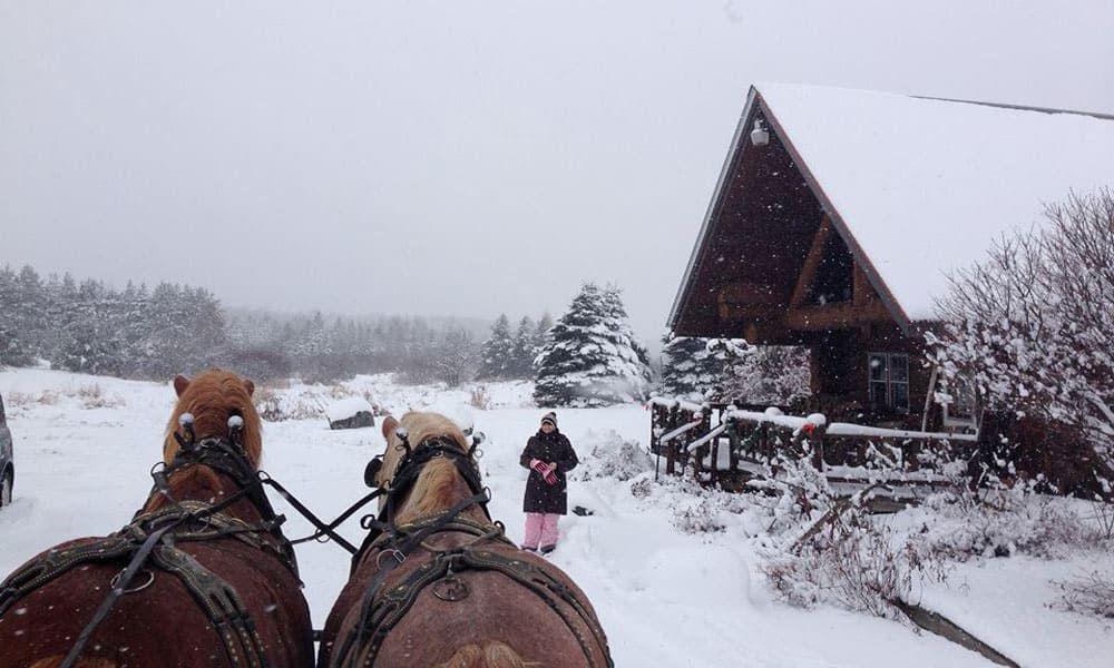 Cowgirl - Winter