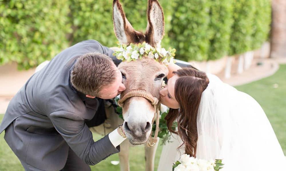 wedding beer burros Vanessa Rice Derek Rice Cowgirl Magazine