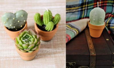 cactus candles cover