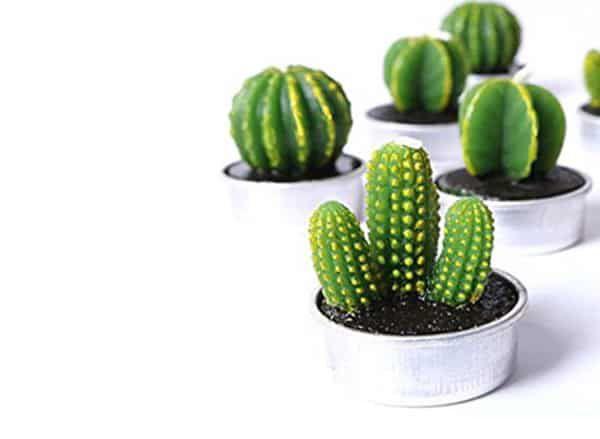 cactus-candles