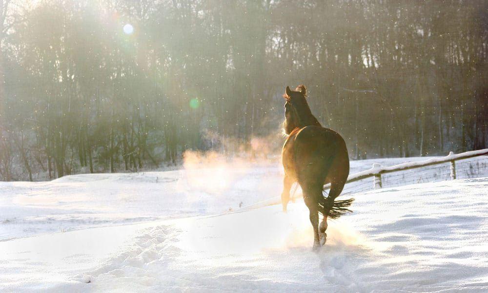 Cowgirl - Hoof