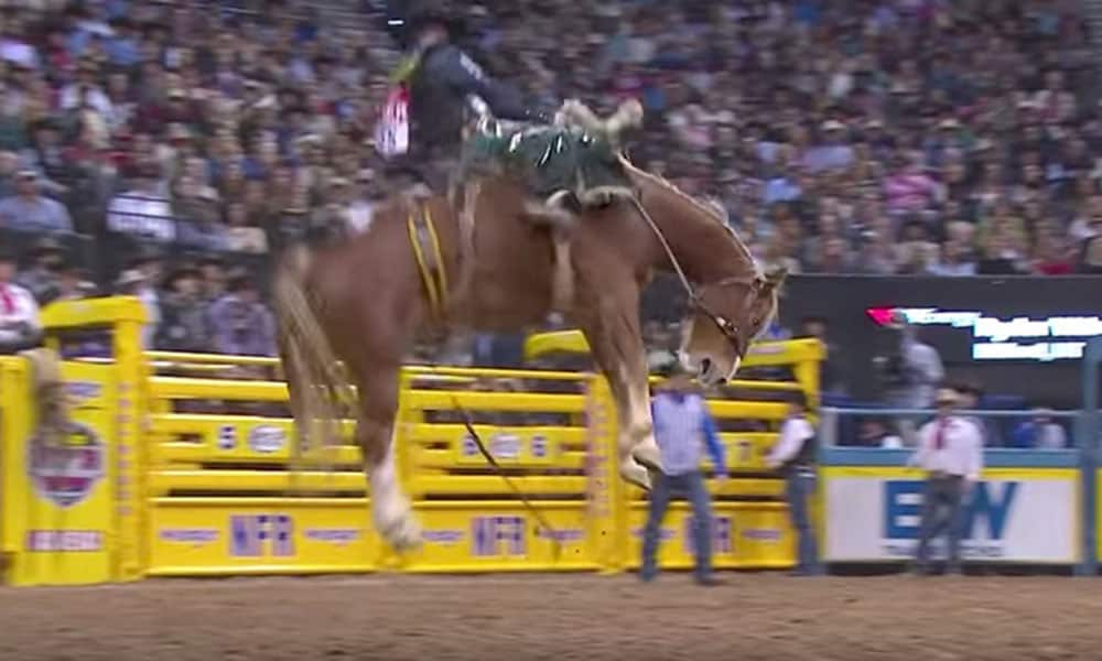 WNFR 2018 Bucking Horses Bulls Rough Stock Cowgirl Magazine