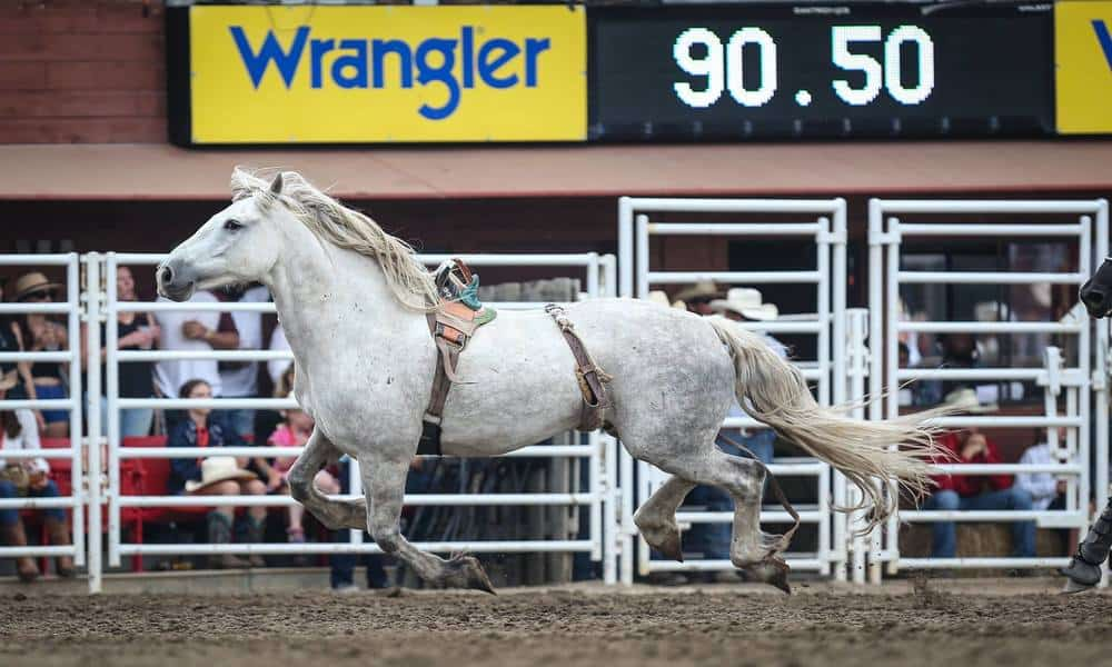 Virgil C5 Rodeo Bareback Horse Cowgirl Magazine