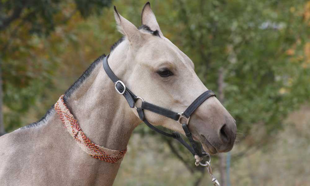 """Cowgirl Magazine"" - Rare Horse Breeds"