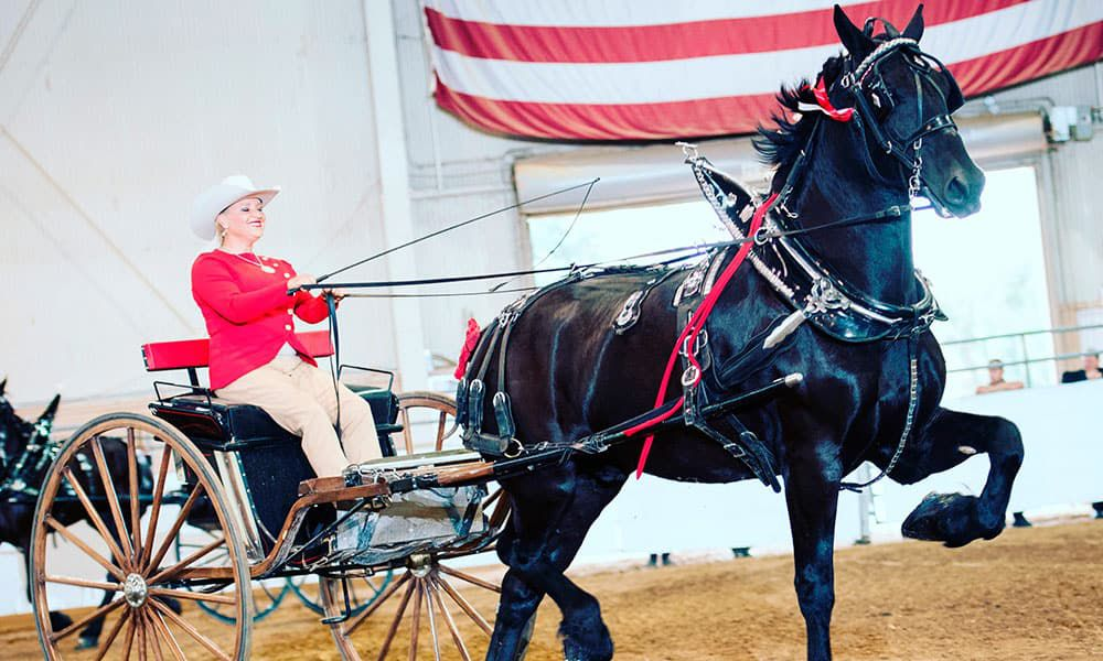 Percheron Draft Horses Kellie Rettinger Road to the Horse Cowgirl Magazine