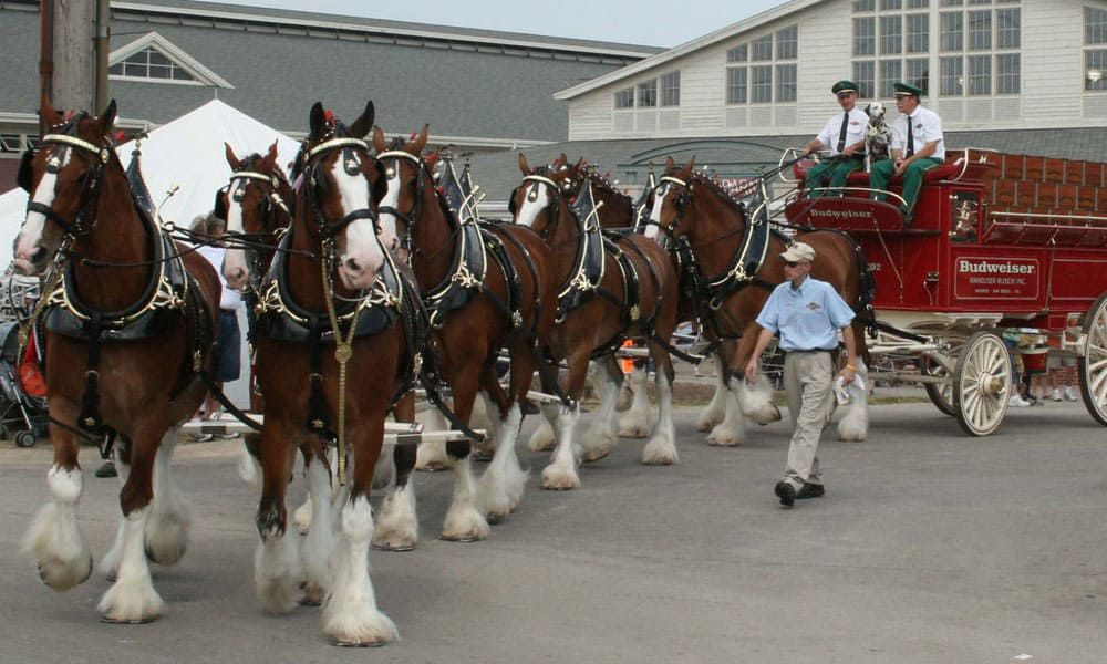 """""""Cowgirl Magazine"""" - Budweiser Clydesdales"""