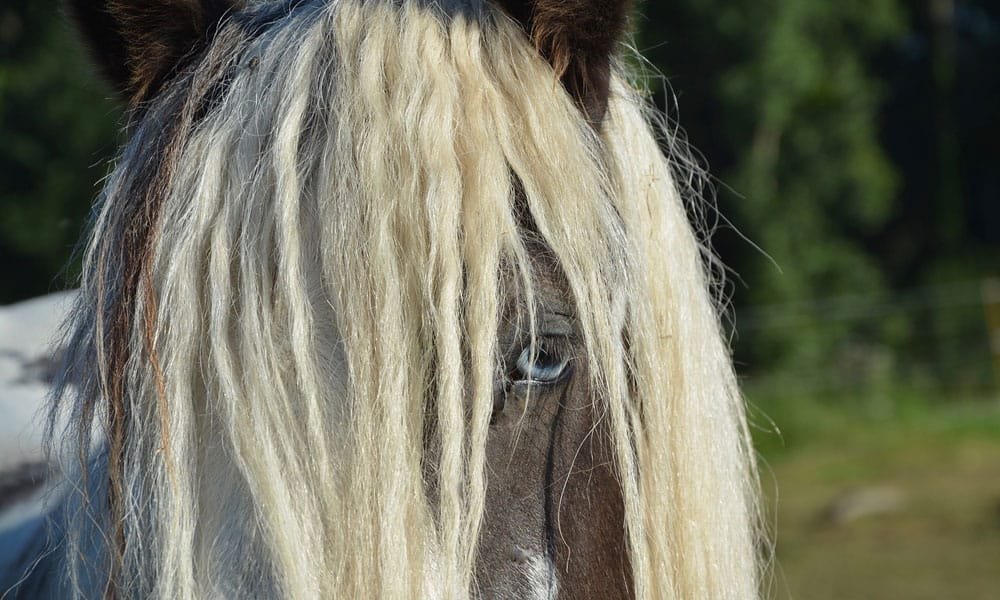 """Cowgirl Magazine"" - Mane Tail"
