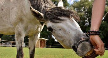 """Cowgirl Magazine"" - Homemade Horse Treats"