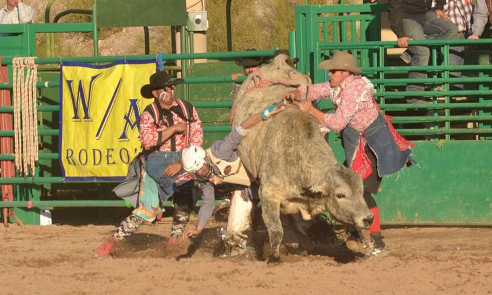 Gold Rush Days Wickenburg Arizona Bronc Riding WA Rodeo Cowgirl Magazine Bulls